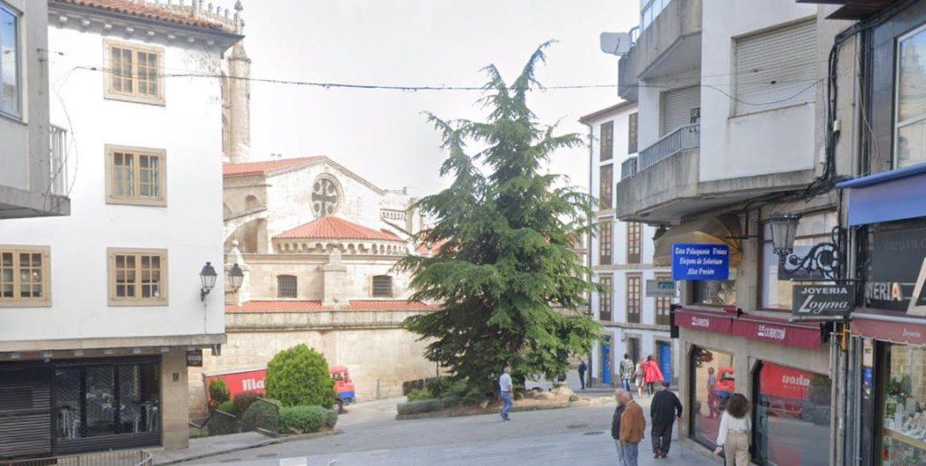 Cedro en la trasera de la Catedral