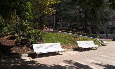 Árbol caído en el Parque de San Lázaro