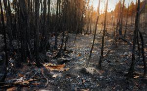 Cenizas después de un incendio forestal