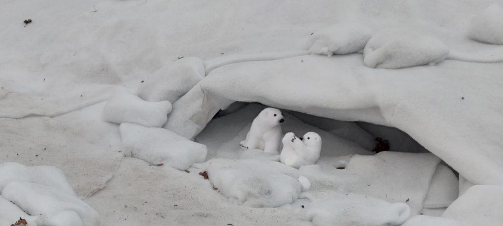 Osos Polares en el Belén de Allariz