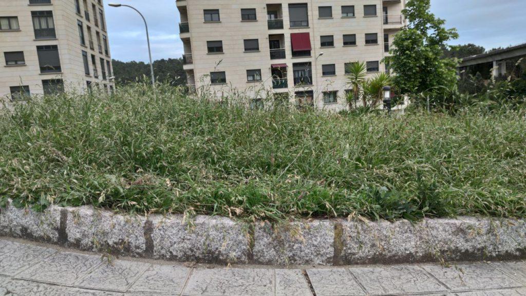 Hierba alta en A Valenzá