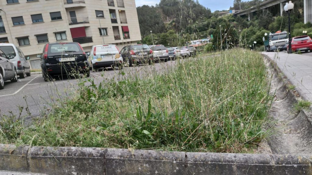 Jardines mal cuidados en A Valenzá