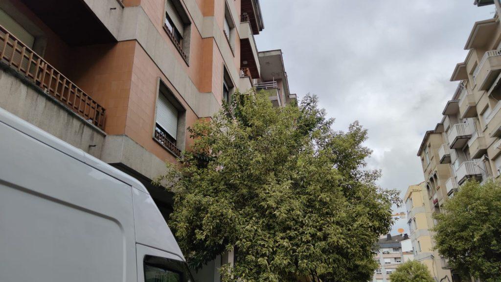 Árboles en Jesús Soria