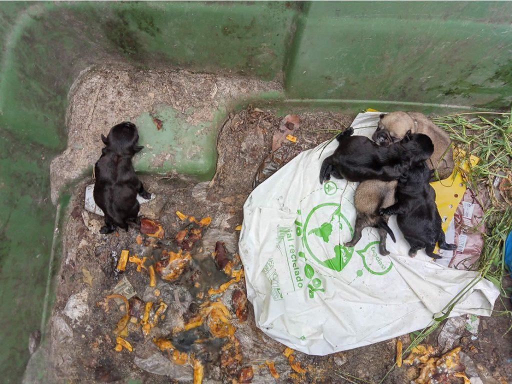 Perros abandonados en Allariz